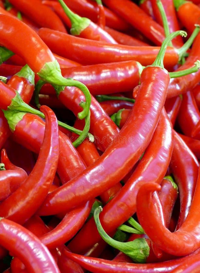 Peperoni freschi del Cile da vendere ad un mercato degli agricoltori immagini stock
