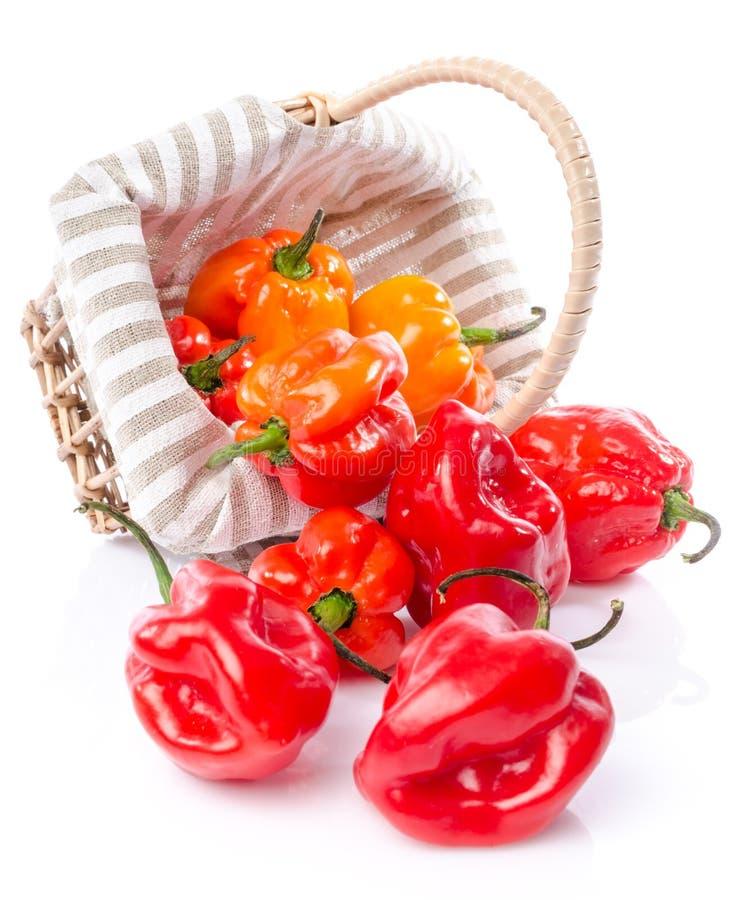 Peperoni freschi del habanero in un canestro fotografie stock libere da diritti