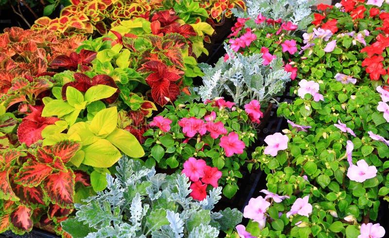 Pepiniera kwiatu sprzedaże fotografia royalty free