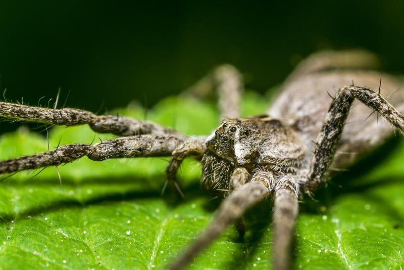 pepiniery pająka sieć obraz stock
