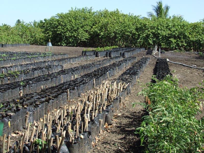pepiniery plantacja zdjęcia royalty free