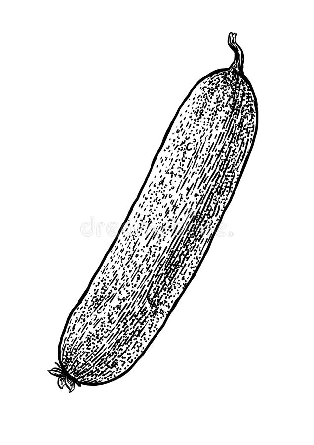 Pepinillo, ejemplo del pepino, dibujo, grabado, línea arte, verdura, vector libre illustration