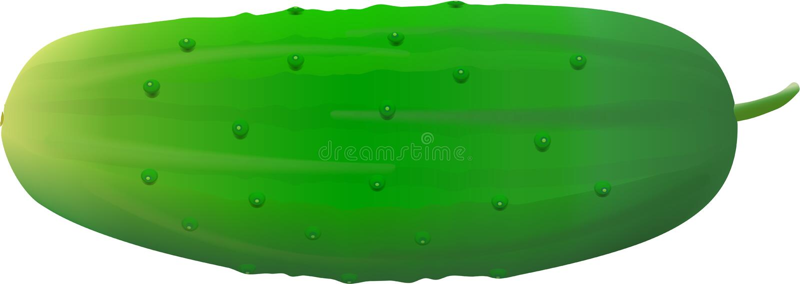 pepino ilustração stock