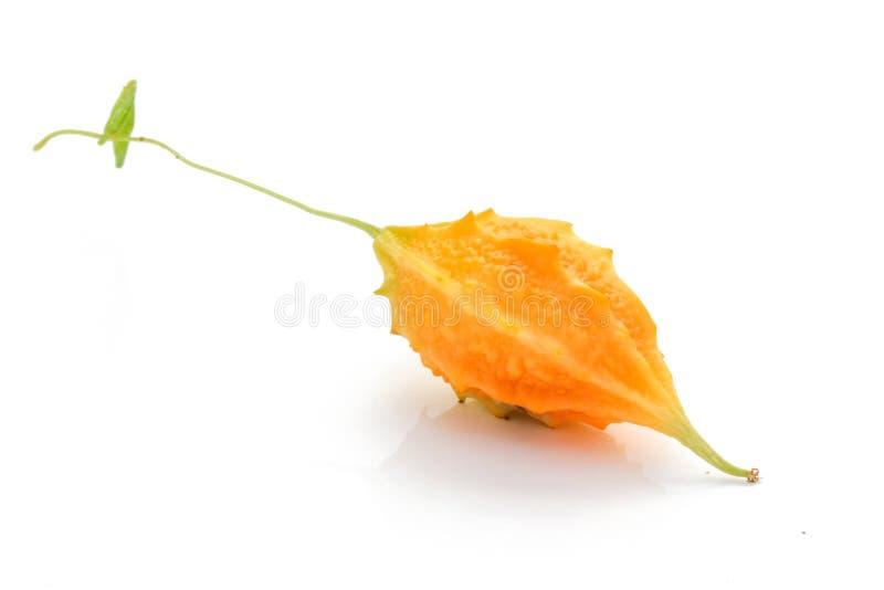 Pepino amargo, planta erval imagens de stock
