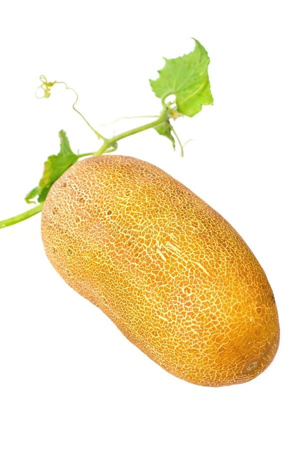 Pepino com sementes imagem de stock royalty free