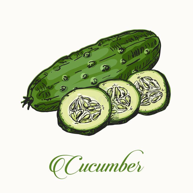 pepino em um estilo do esboço Vegetais da série ilustração royalty free