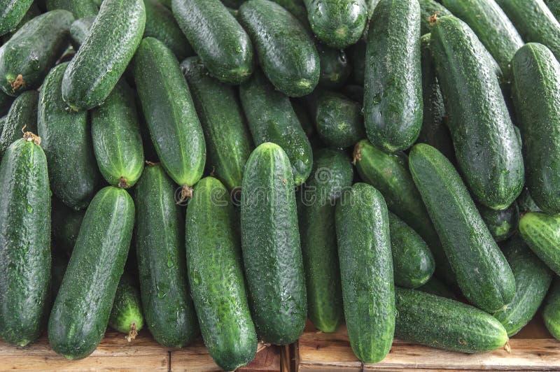 Pepino orgânico verde saudável fresco no mercado agrícola do fazendeiro foto de stock royalty free