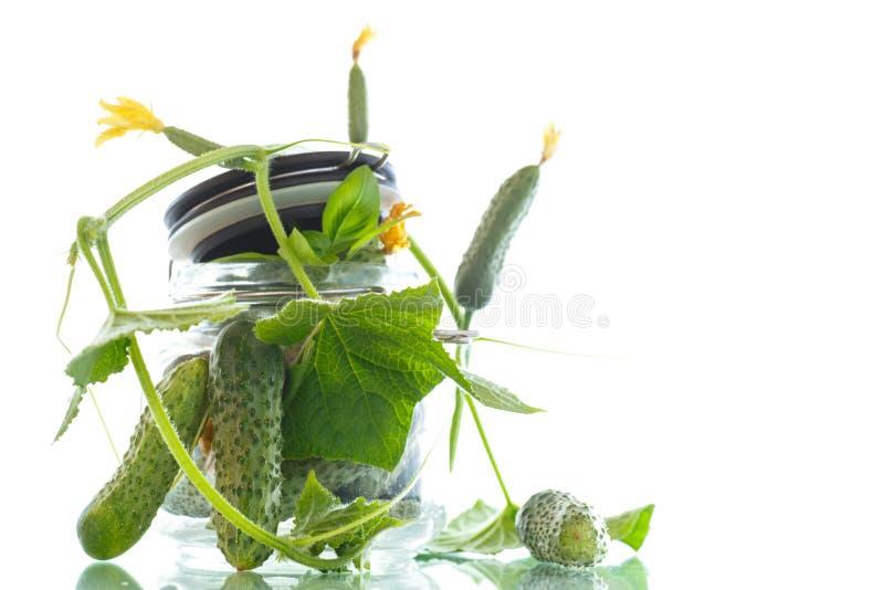 Pepinos conservados com ervas e especiarias imagem de stock