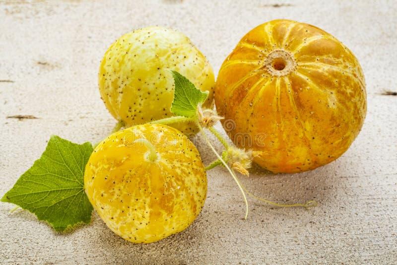 Pepinos del limón fotos de archivo libres de regalías