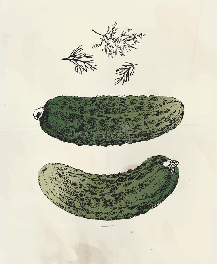 Pepinos dibujados tinta ilustración del vector