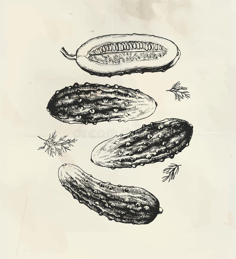 Pepinos dibujados tinta libre illustration