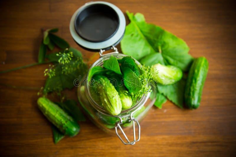 Pepinos e especiarias com as ervas para enlatar em um frasco imagem de stock