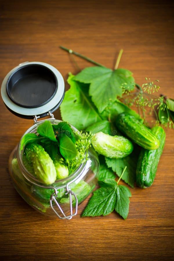 Pepinos e especiarias com as ervas para enlatar em um frasco imagem de stock royalty free