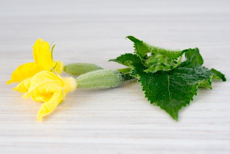 Pepinos, hojas y flores imágenes de archivo libres de regalías
