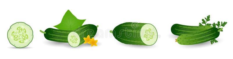 Pepinos no grupo do estilo dos desenhos animados Pepino inteiro, metade, fatias e grupo dos pepinos Coleção fresca dos vegetais d ilustração stock
