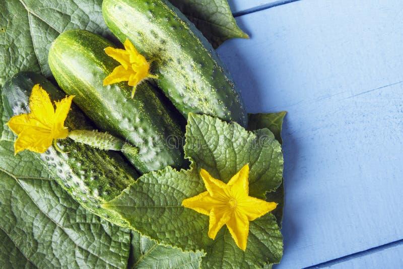 Pepinos orgánicos frescos y flores amarillas en las hojas verdes Opinión superior sobre la tabla de madera con el espacio de la c fotos de archivo libres de regalías
