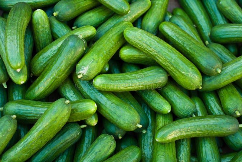 Pepinos orgânicos da salmoura fotografia de stock