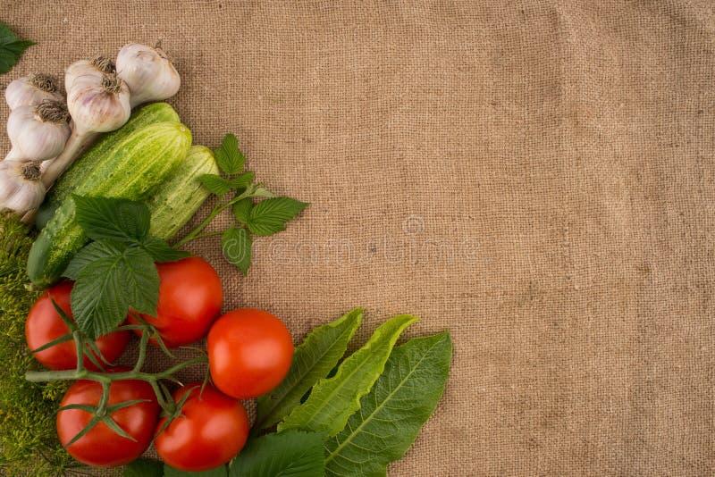 Pepinos, tomates, alho e aneto no fundo do sa velho fotografia de stock royalty free