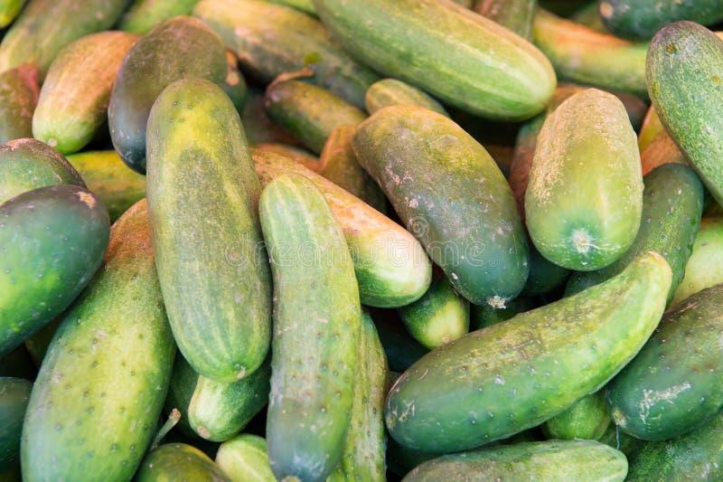 Download Pepinos verdes frescos foto de stock. Imagem de pilha - 80100838