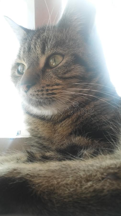 Peppa猫 免版税图库摄影