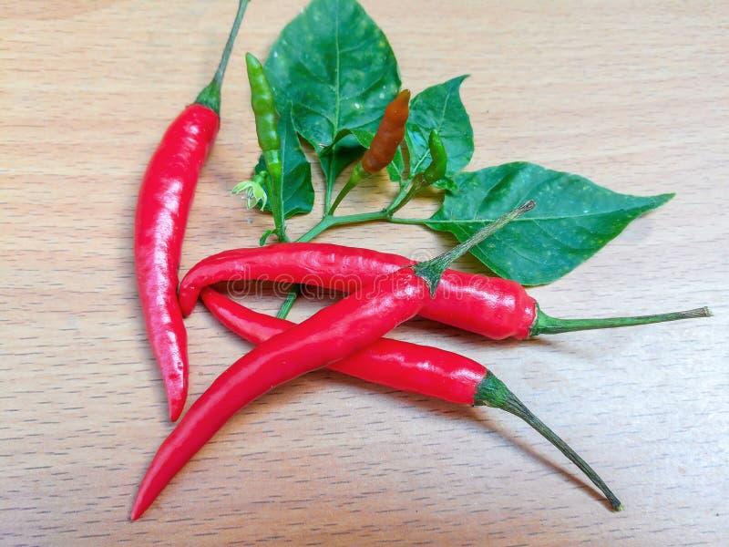 Peppar för röd chili som isoleras på vit bakgrund royaltyfria foton