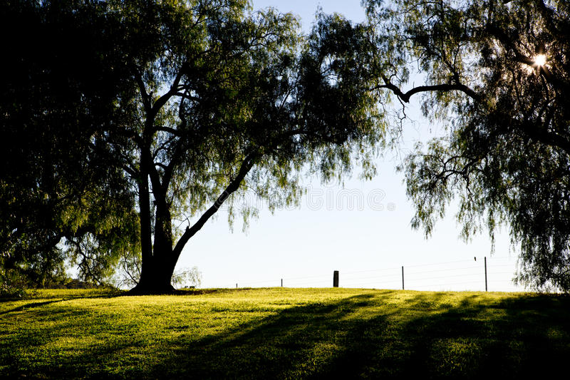 Pepparkornträd drar tillbaka tänt av ottasolen i land arkivfoto