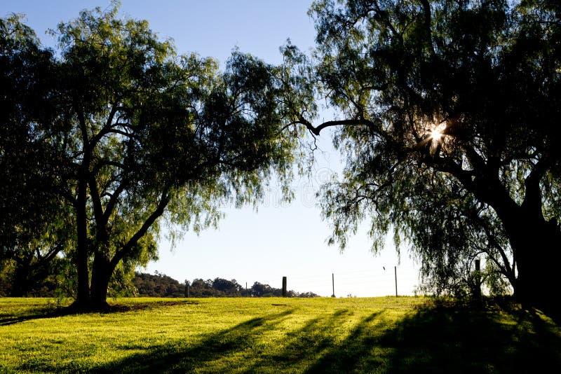 Pepparkornträd drar tillbaka tänt av ottasolen i land royaltyfri foto