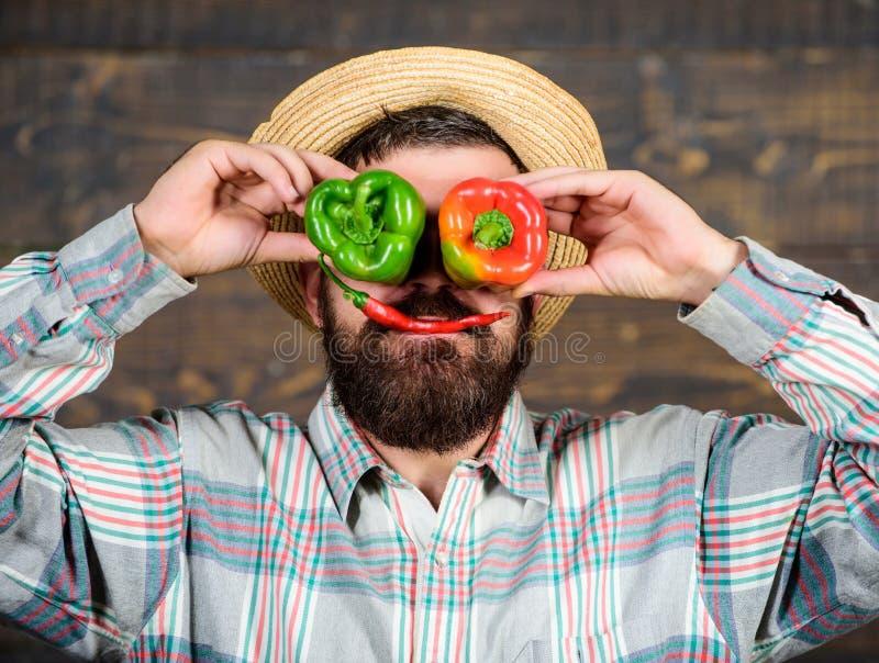 Pepparskördbegrepp Bonde som har rolig träbakgrund Skörd för manhållpeppar som rolig emotionell grimas chili royaltyfri foto