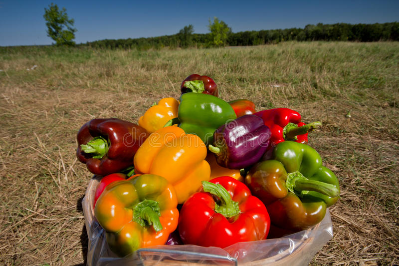 Download Pepper Stock Image - Image: 26435551