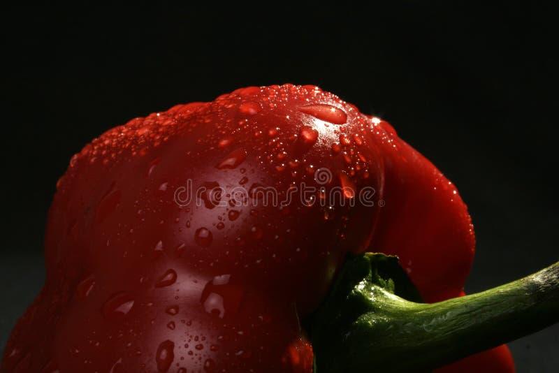 pepper fotografia royalty free