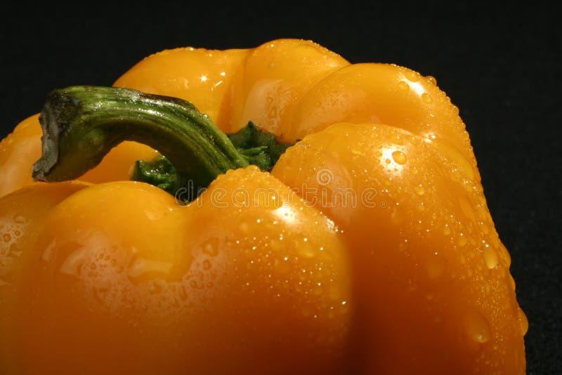 pepper obraz royalty free