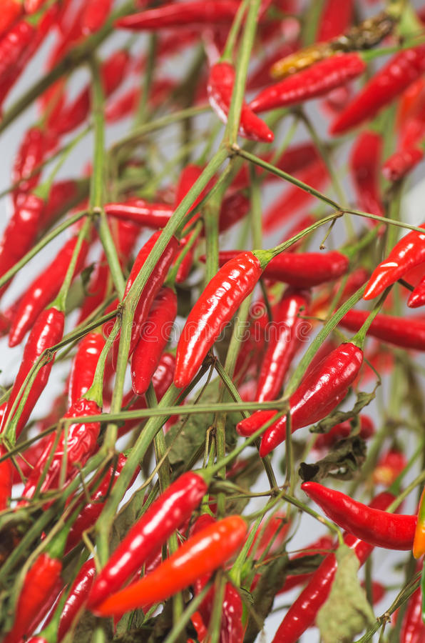 Free Pepper 7 Royalty Free Stock Images - 35490609
