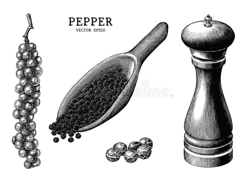 Pepper collection hand draw vintage clip art isolated on white b stock illustration