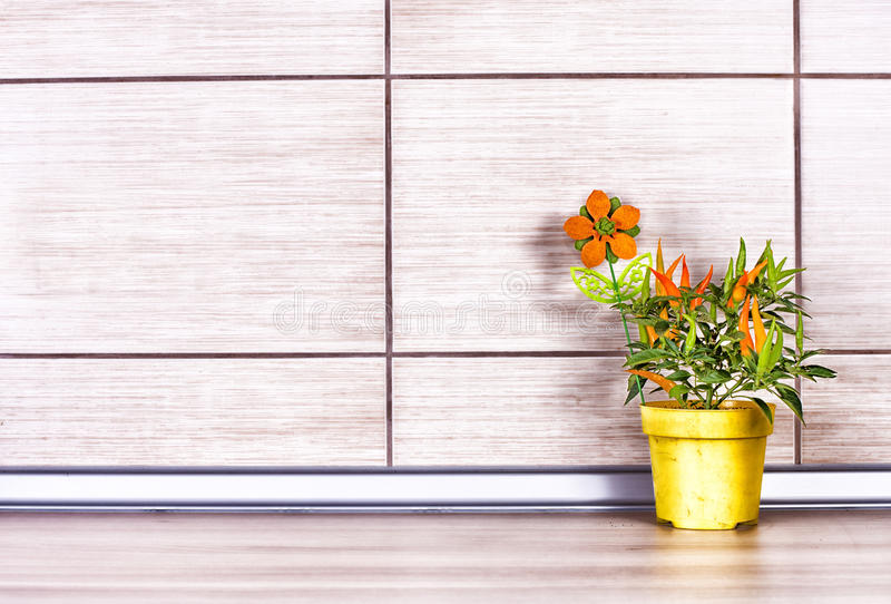 Pepper in flower pot on kitchen counter. Paprika plant in yellow flower pot on wooden kitchen countertop with beige tiles on the wall. Clean design and cooking royalty free stock photo