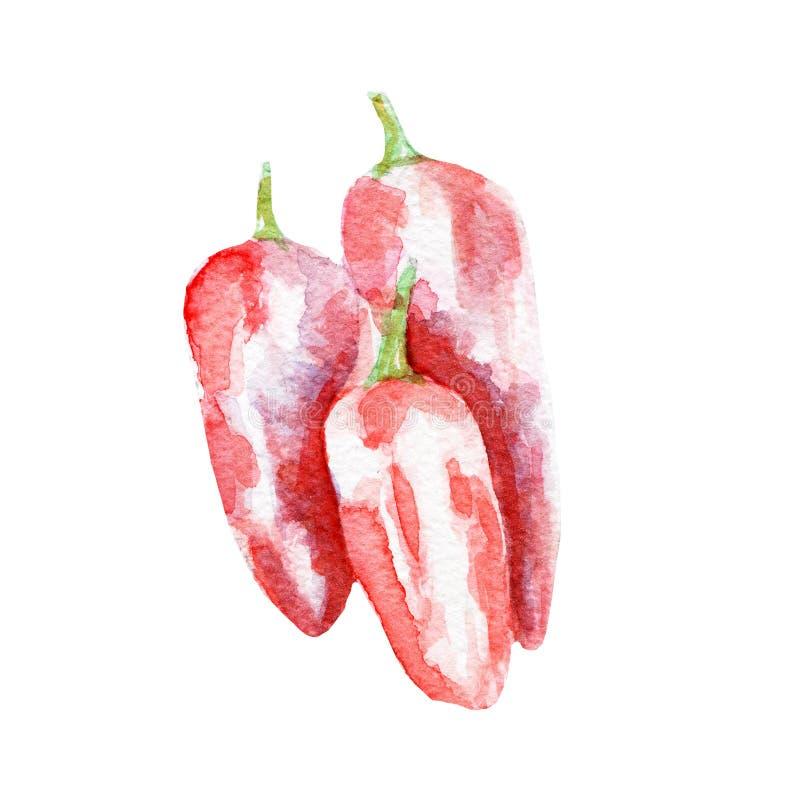 Pepper illustration. Hand drawn watercolor on white background. stock illustration