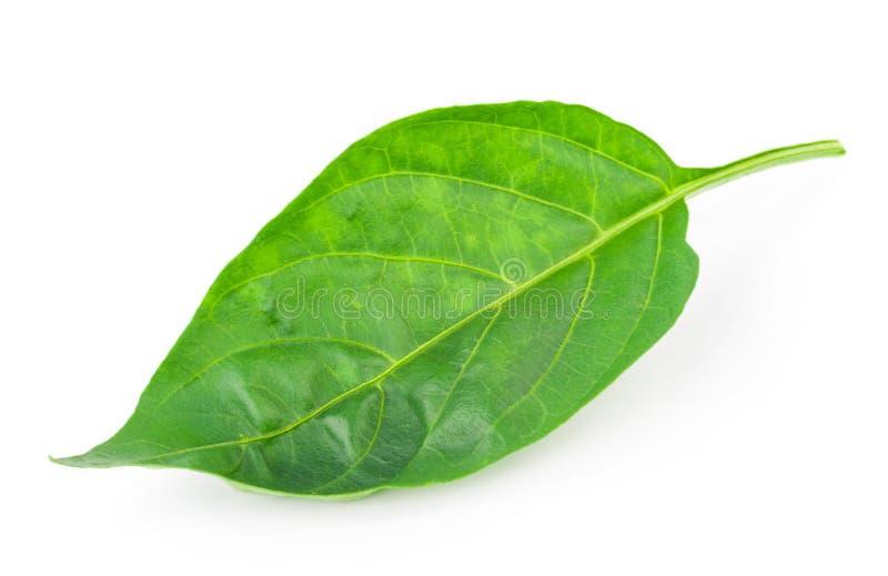 Pepper leaf stock images