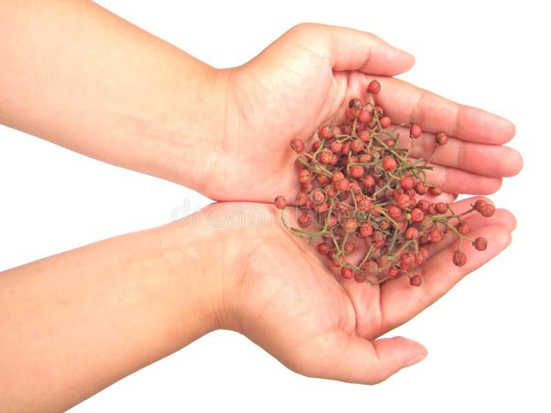 pepper szechuan ręce fotografia royalty free