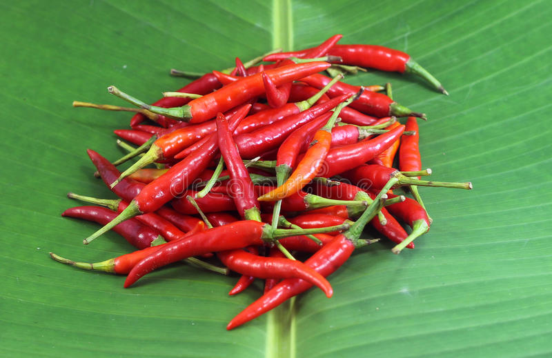 Pepper thailand royalty free stock images