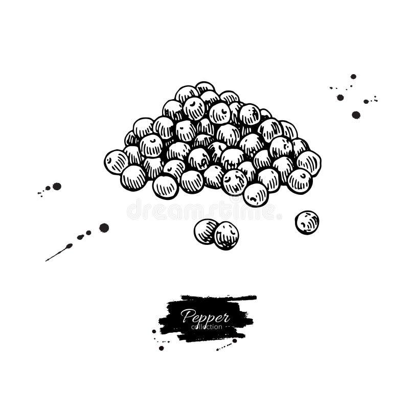 Peppercorn rozsypiska wektoru rysunek Rocznik pikantności ręka rysujący nakreślenie ilustracja wektor