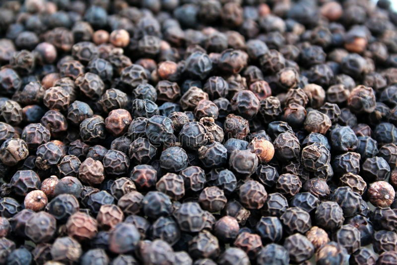 Peppercorns stock image