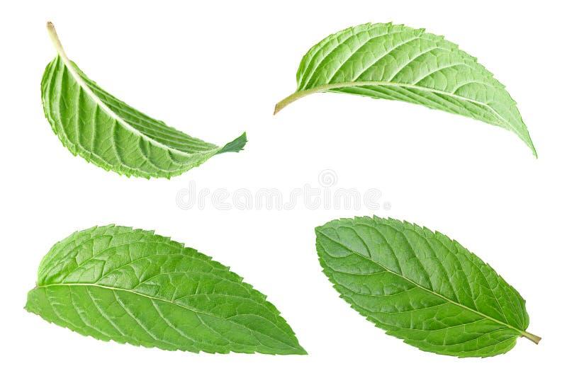 Peppermint φύλλο στο λευκό στοκ φωτογραφίες με δικαίωμα ελεύθερης χρήσης