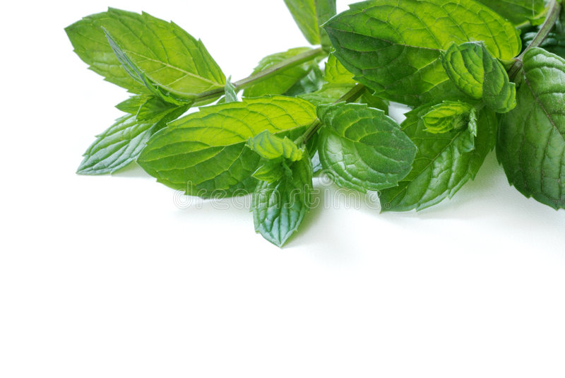 Peppermint royalty free stock image