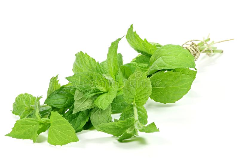 Peppermint royalty free stock photography