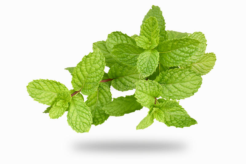Peppermint royalty free stock photos