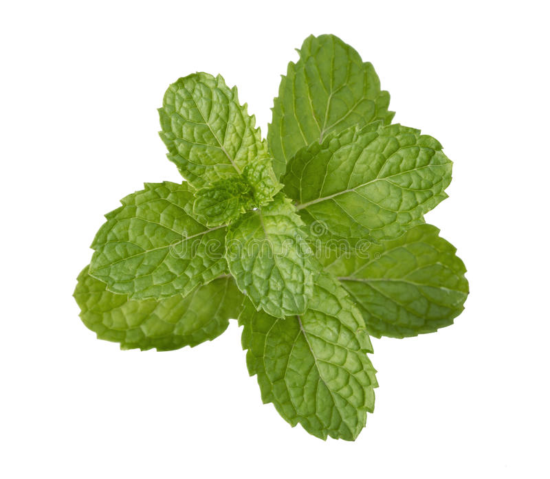 Peppermint leaf stock photography