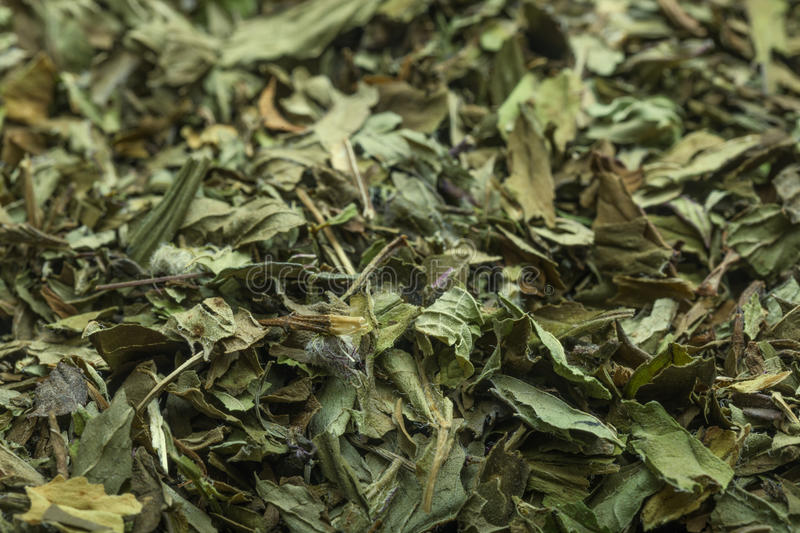Peppermint tea in macro. Macro shot of dried peppermint tea royalty free stock images