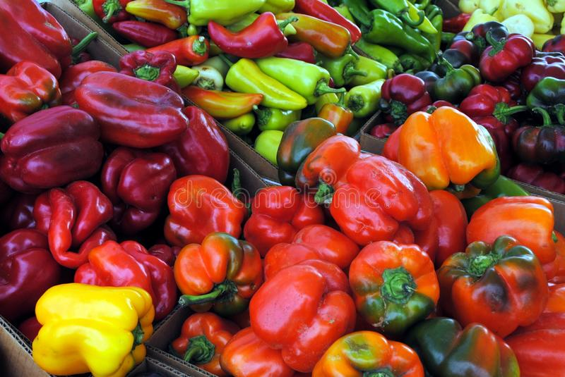 Download Peppers stock image. Image of yellow, food, ingredients - 15911469