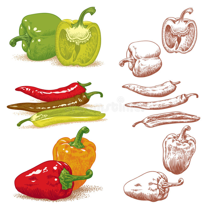 Download Peppers stock vector. Image of cayenne, food, growing - 24107146