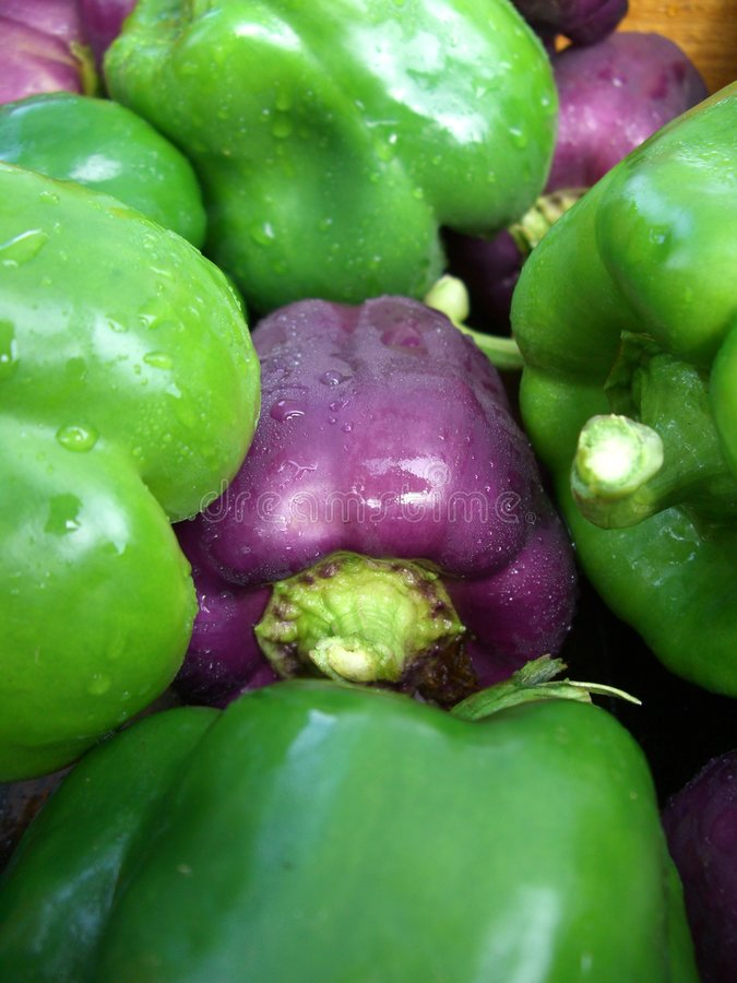 Download Peppers stock photo. Image of vegetable, green, pepper - 978330
