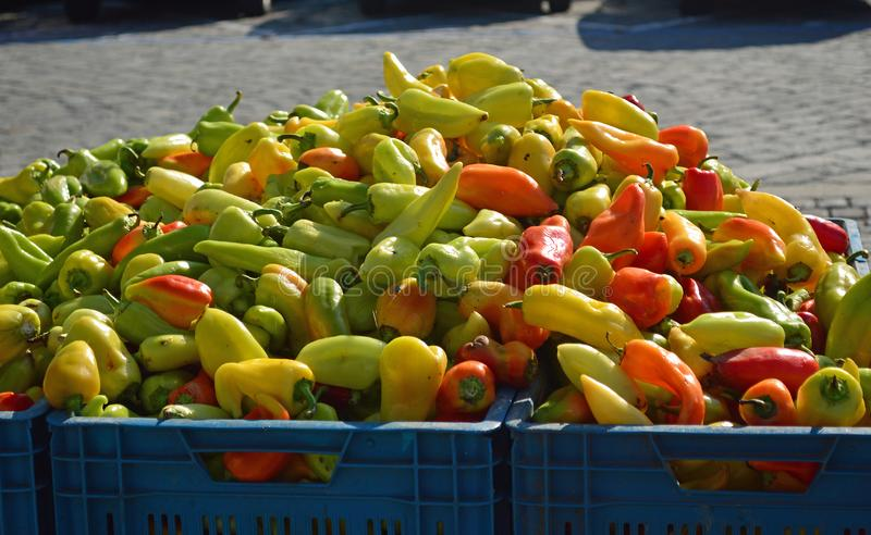 Peppers at Brno Cabbage Market, Moravia, Czech Republic. Green, yellow orange and red peppers at Cabbage Market Zelný trh . Its situated in the middle of the stock photos